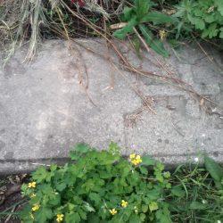 Foto #2 Polish Cemetery